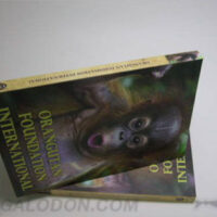 DVD Book spine